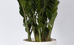 Niezniszczalne rośliny do biura – zielona dekoracja urzędów, instytucji i powierzchni biurowych