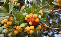 Krzewy i drzewa owocowe – uprawa rzadkich gatunków