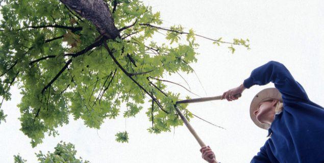 Tniemy drzewa i krzewy