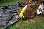 Prace w ogrodzie. Kalendarz prac ogrodniczych na cały rok - zaplanuj już dziś!
